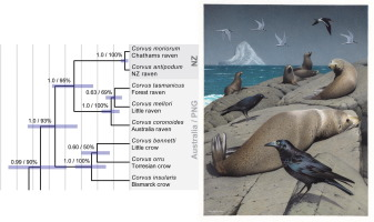 The origin and phylogenetic relationships of the New Zealand
