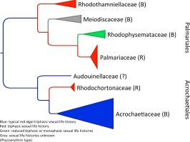 a biochemical phylogeny of the protists ragan mark