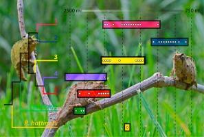 Cryptic diversity in Rhampholeon boulengeri (Sauria: Chamaeleonidae