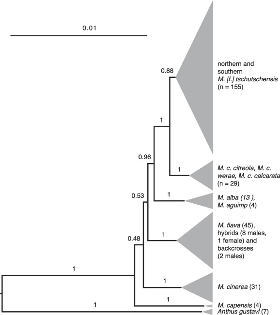 Multi-locus reassessment of a striking discord between mtDNA