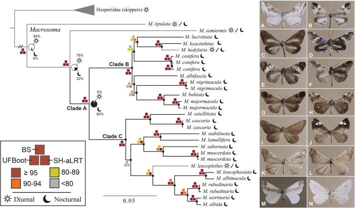 Phylogenetics of moth-like butterflies (Papilionoidea