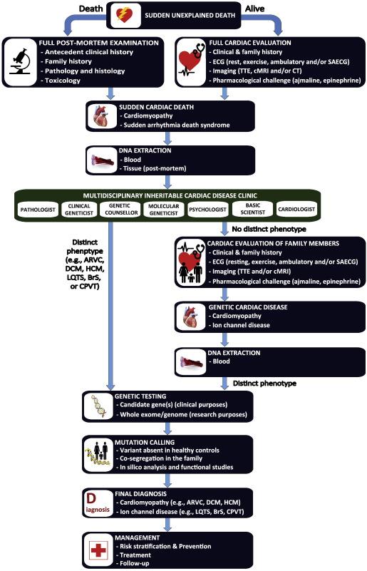 The future of sudden cardiac death research - ScienceDirect