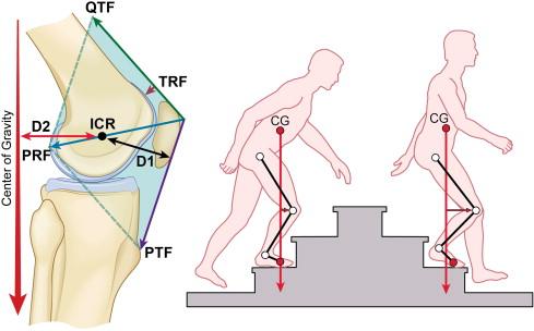 Biomechanics of the Patellofemoral Joint - ScienceDirect