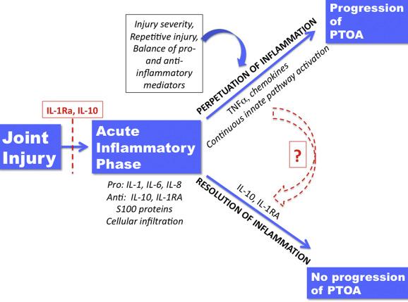 inflamatii acute articulare)