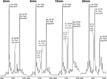 A c d 2 a pikkelysmr kezelsben - ASD2 frakció a prosztatagyulladás kezelésében