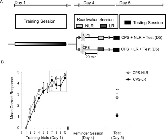 Retrieval under stress decreases the long-term expression of a human