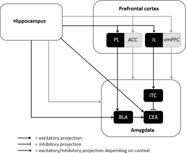 A translational perspective on neural circuits of fear