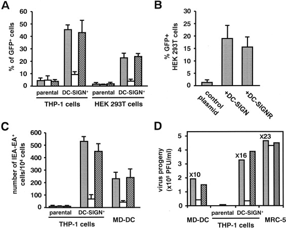 Human Cytomegalovirus Binding To Dc Sign Is Required For Dendritic Cell Infection And Target Cell Trans Infection Sciencedirect
