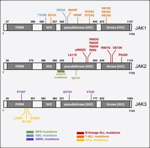 Janus Kinase Deregulation in Leukemia and Lymphoma