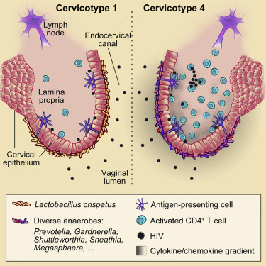 Lactobacillus-Deficient Cervicovaginal Bacterial Communities Are