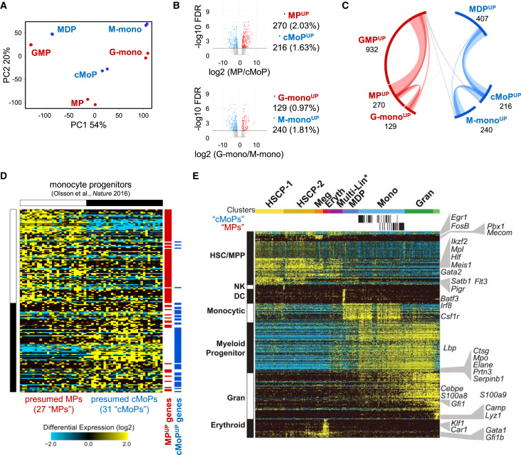 Granulocyte-Monocyte Progenitors and Monocyte-Dendritic Cell