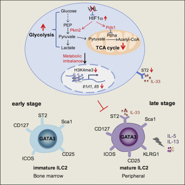 E3 Ligase Vhl Promotes Group 2 Innate Lymphoid Cell Maturation And
