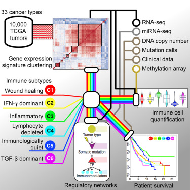 Cancer Gene Twice As Likely To Be >> The Immune Landscape Of Cancer Sciencedirect