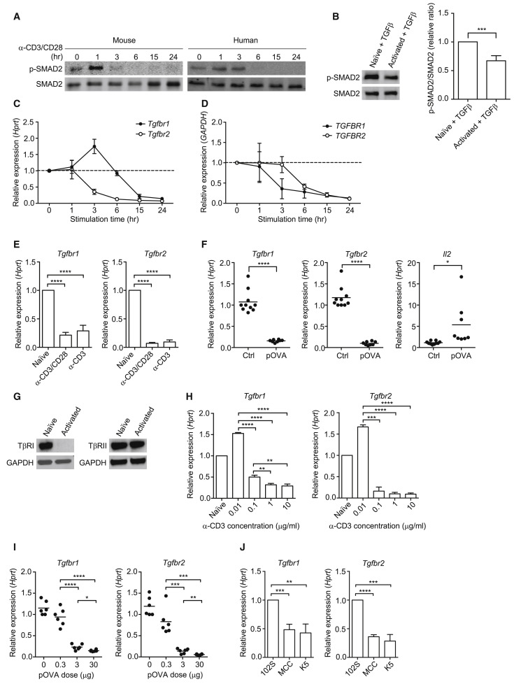 T Cell Receptor Regulated Tgf Type I Receptor Expression