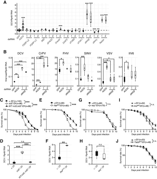 The Kinase Ikk Regulates A Sting And Nf B Dependent Antiviral