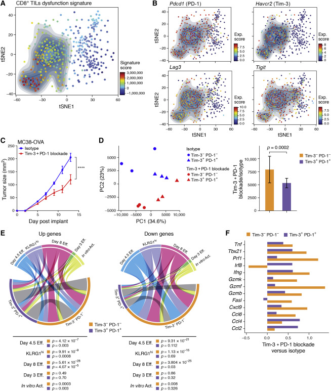 Checkpoint Blockade Immunotherapy Induces Dynamic Changes in