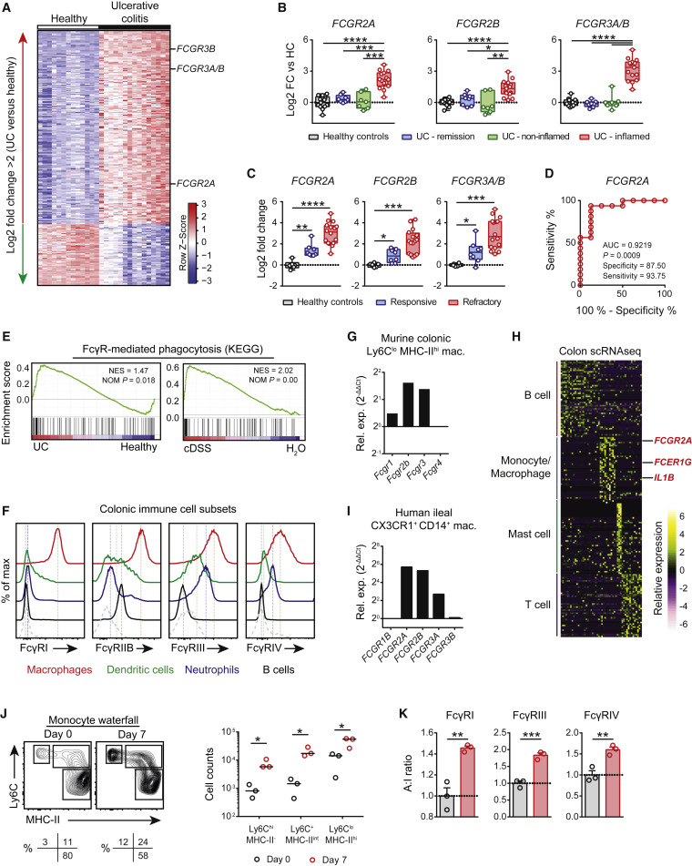 Anti-commensal IgG Drives Intestinal Inflammation and Type