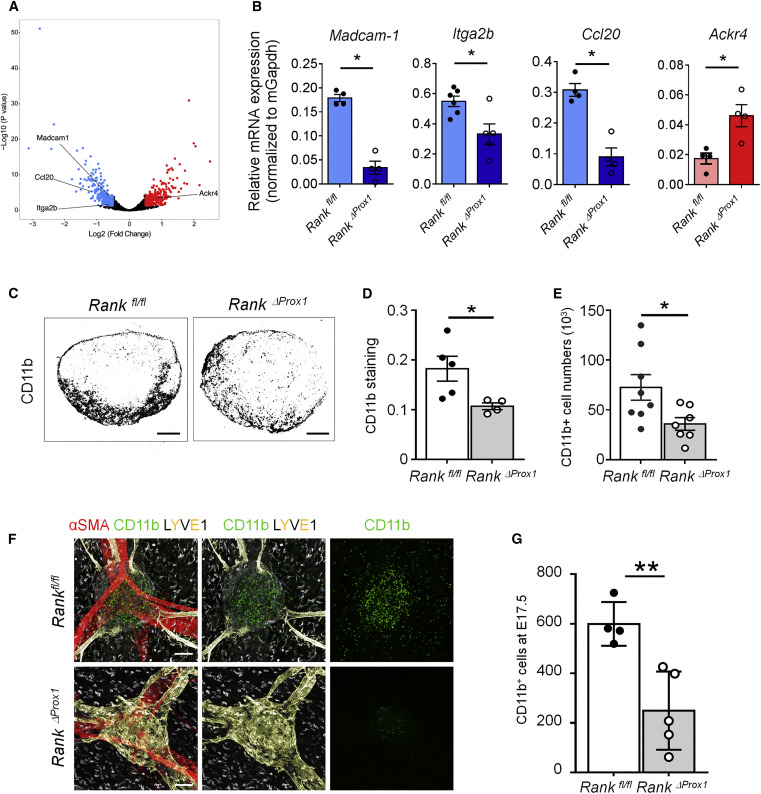 Lymph Node Mesenchymal and Endothelial Stromal Cells