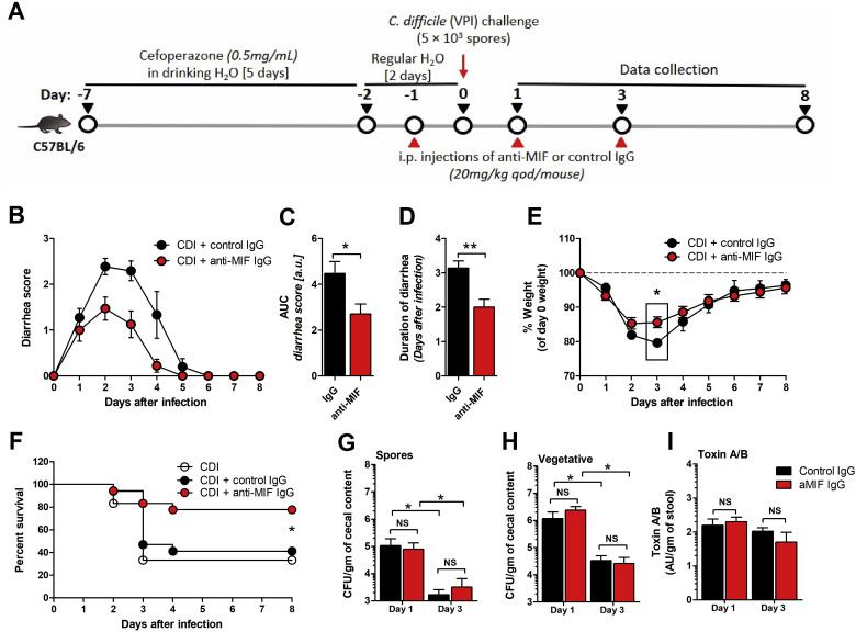 Neutralization Of Macrophage Migration Inhibitory Factor Improves Host Survival After Clostridium Difficile Infection Sciencedirect