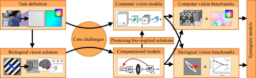 Bio-inspired computer vision: Towards a synergistic approach of ...