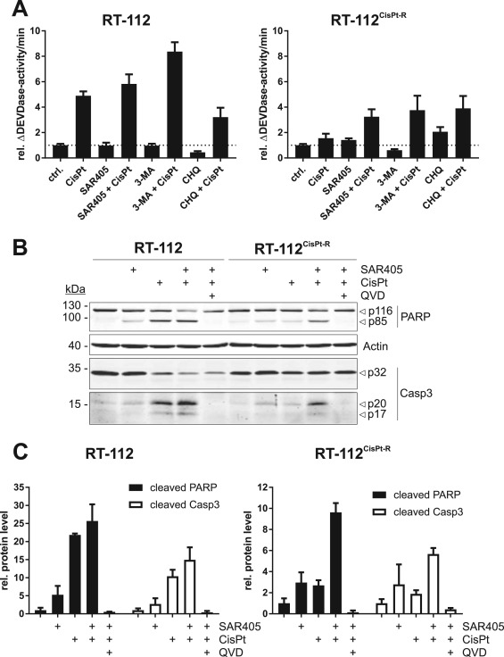 Targeting urothelial carcinoma cells by combining cisplatin with a