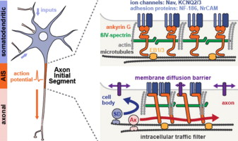 No Pasaran! Role of the axon initial segment in the