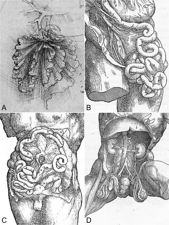 Anatomy Of The Mesentery Historical Development And Recent Advances