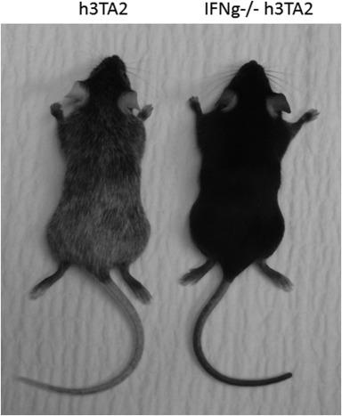 Replenishing Regulatory T Cells To Halt Depigmentation In Vitiligo Sciencedirect