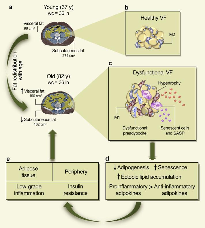 foto de Low-grade inflammation in the relationship between sleep ...