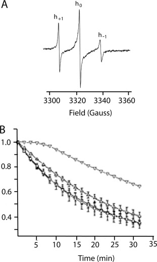 Asexual reproduction fungi conidial suspension