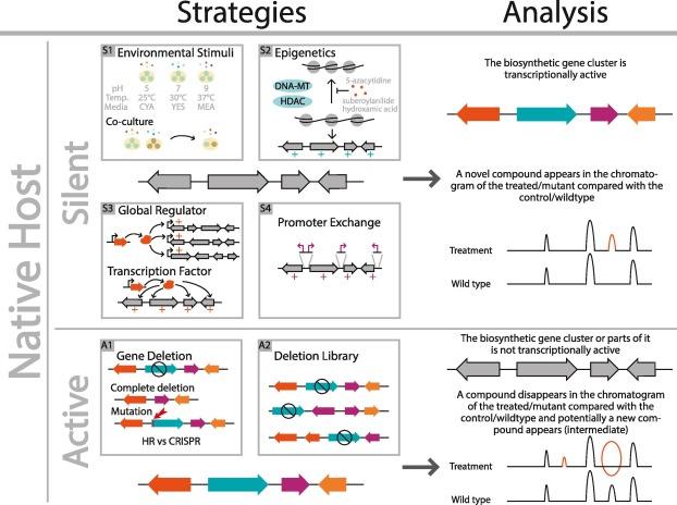 Strategies to establish the link between biosynthetic gene