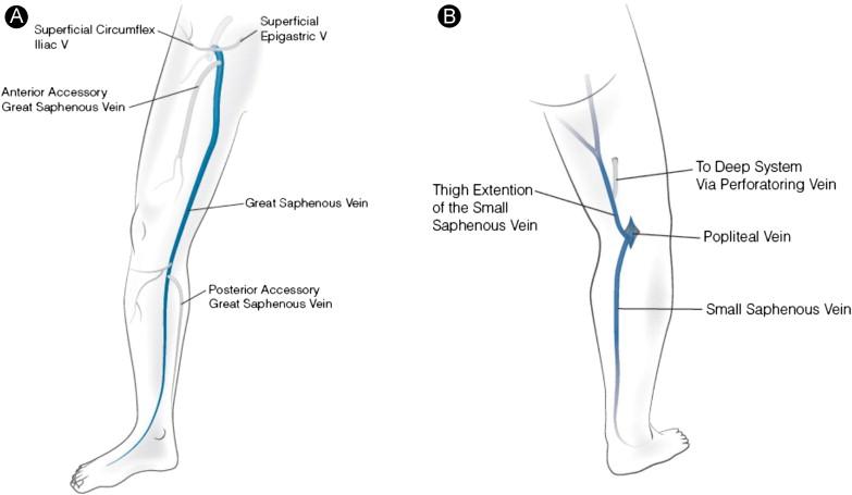 Diagram Of Superficial Leg Veins Diy Wiring Diagrams