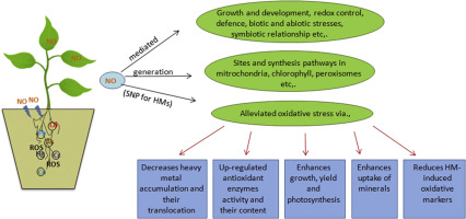 Nitric Oxide and Signaling in Plants,