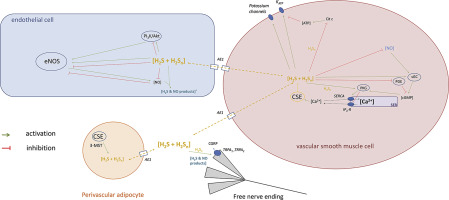 The Mechanism Of Action And Role Of Hydrogen Sulfide In The Control