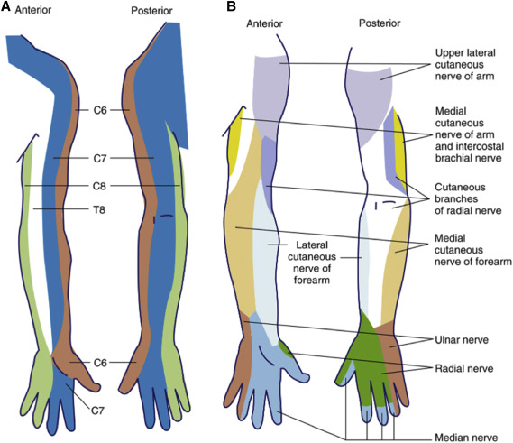 The Prevention And Recognition Of Ulnar Nerve And Brachial Plexus