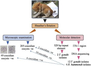 Molecular investigation on the occurrence of Toxoplasma