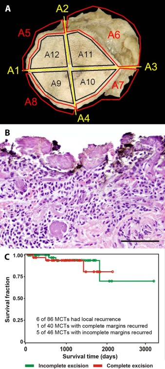 Canine cutaneous mast cell tumors: A combined clinical and