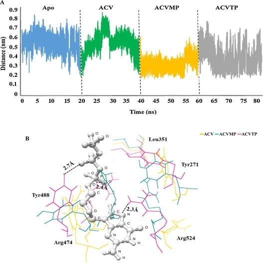 Antiviral drug acyclovir exhibits antitumor activity via