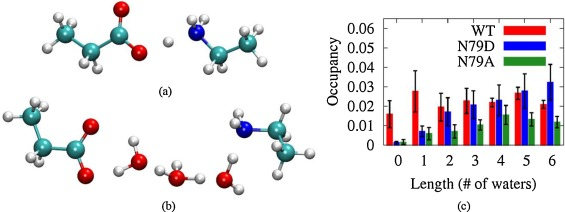 Molecular dynamics simulations reveal a new role for a conserved
