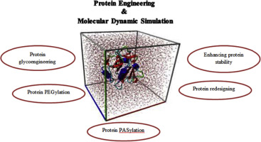 Molecular dynamics simulation for rational protein