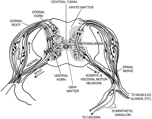 Reptilian Neurology Anatomy And Function