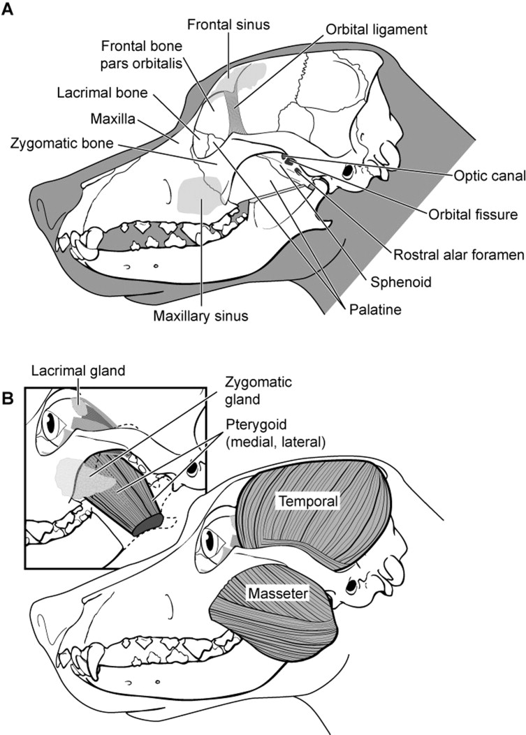 Surgery of the Globe and Orbit - ScienceDirect