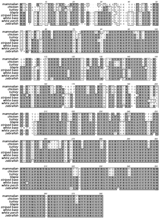 Sequence conservation among fish myostatin orthologues and