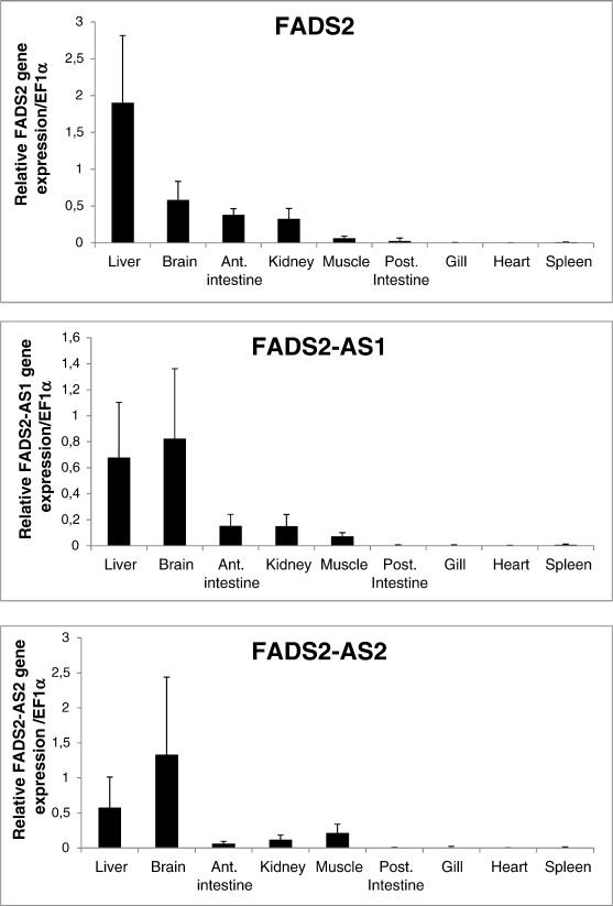 Cloning And Functional Characterization Of 6 Fatty Acid Desaturase