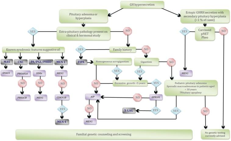 hypersecretion of human growth hormone