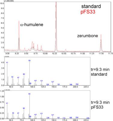Engineering Methylobacterium extorquens for de novo