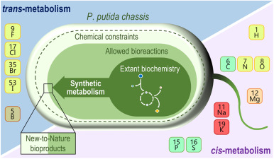 Pseudomonas putida as a functional chassis for industrial