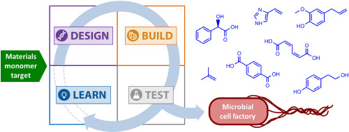 Rapid prototyping of microbial production strains for the biomanufacture of potential materials monomers