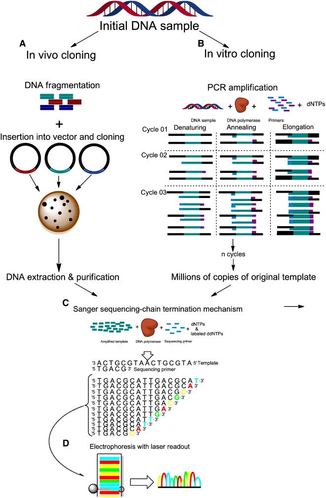 A Glimpse Into Past Present And Future Dna Sequencing Sciencedirect