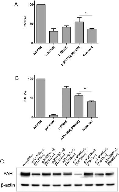 Co-expression of phenylalanine hydroxylase variants and